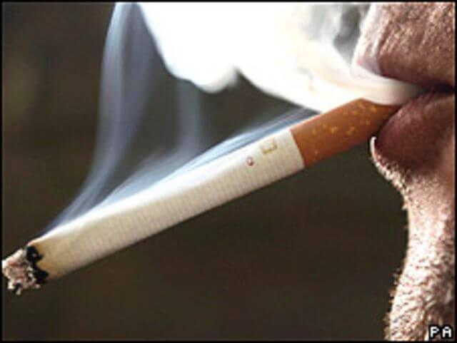 100105145600 sp tabaco pa 226x170 1