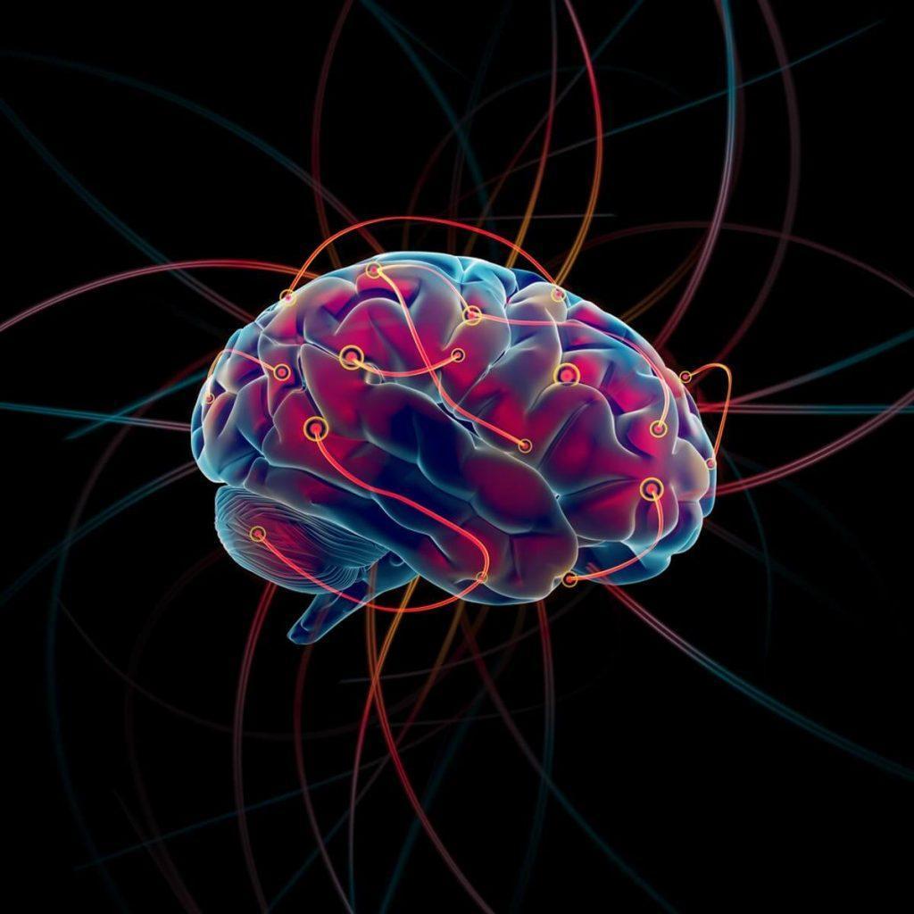 conectoma cerebro 1